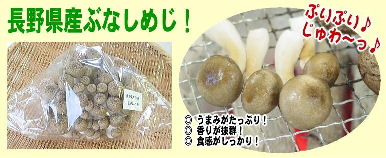 長野県産ぶなしめじ!新品種NN-11菌を使用した、信州ハーツ自慢のぷりぷりぶなしめじです!