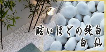 白玉砂利 白仙