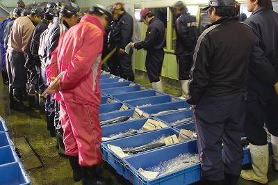 弊社は羅臼魚市場を始め直接競り落としています。また函館や富良野市場へ出荷もしております。