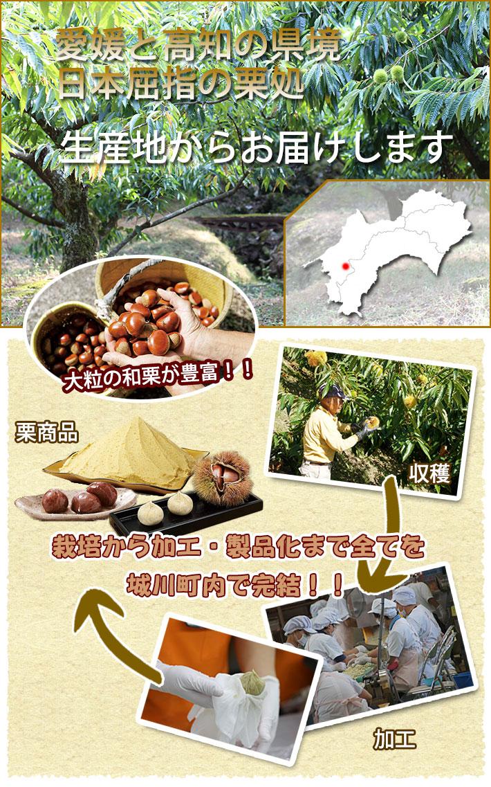 栗栽培製造説明