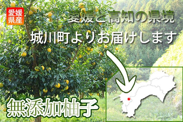 柚子栽培の現場