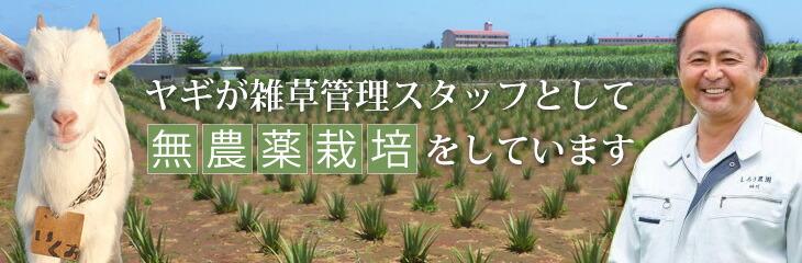 ヤギが雑草管理スタッフとして無農薬栽培をしています
