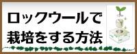 ロックウール栽培について