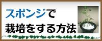 スポンジ栽培について