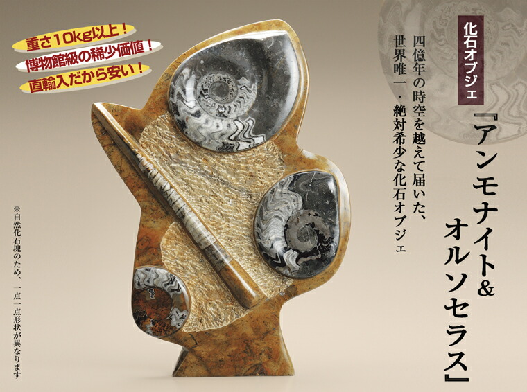 化石オブジェ『アンモナイト&オルソセラス』