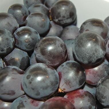 果実表面の白い粉はブルーム(果粉)と言われ、ぶどうが自ら作り上げる新鮮で美味しさの証