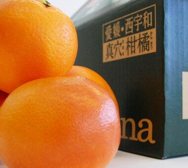 愛媛産ブラッドオレンジが入荷しました