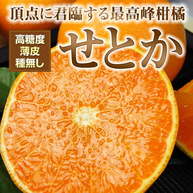 高糖度・薄皮・種無の高級柑橘せとか