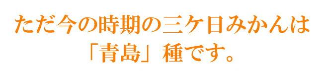 ただ今お取り扱いの三ケ日みかんは青島種です