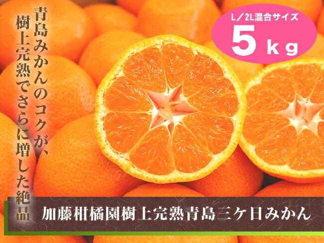 加藤柑橘園青島三ケ日みかん