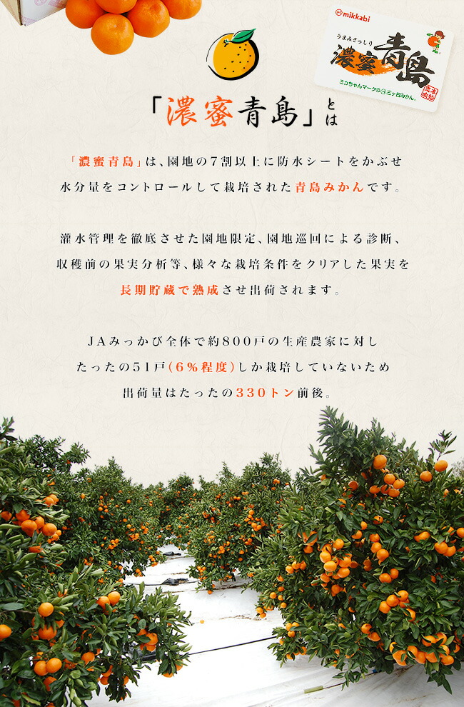 「濃蜜青島」とは 「濃蜜青島」は、園地の7割以上に防水シートをかぶせ水分量をコントロールして栽培された青島みかんです。灌水管理を徹底させた園地限定、園地巡回による診断、収穫前の果実分析等、様々な栽培条件をクリアした果実を長期貯蔵で熟成させ出荷されます。JAみっかび全体で約800戸の生産農家に対したったの51戸(6%程度)しか栽培していないため出荷量はたったの330トン前後。出荷期間は2月中旬から3月初旬、出荷日数は8日程度と極めてレアなみかんなのです。