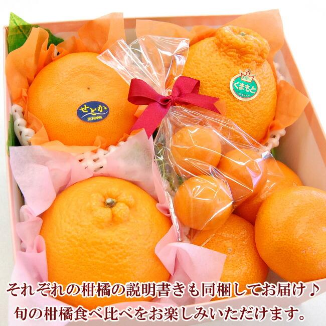 説明カードも同梱!柑橘食べ比べ