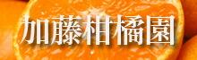 加藤柑橘園