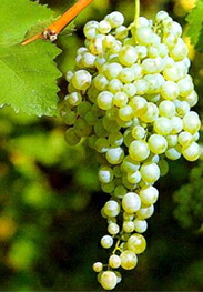 テヌータ・サントーメを代表する2つのワイン