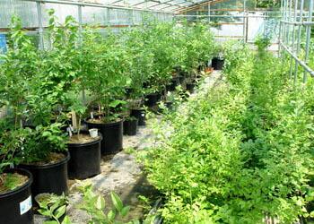 苗木の研究室