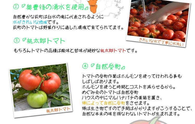 美味しいトマトの秘密2