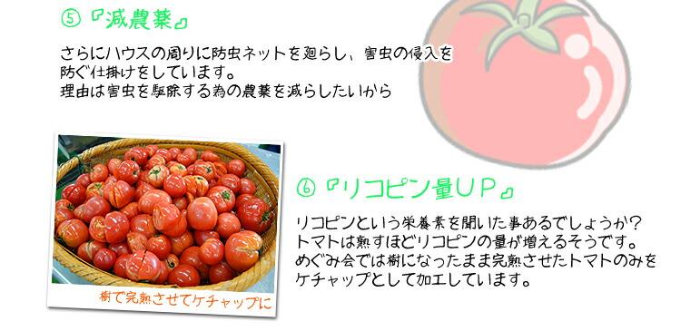 美味しいトマトの秘密3