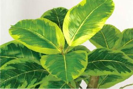 造花 観葉植物 人工観葉植物 アルテシマ ゴムの木 光触媒 フェイクグリーン