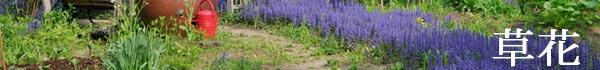足元を彩る草花