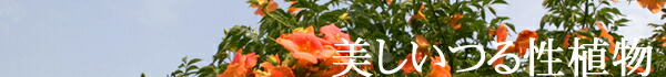 美しいつる性の植物
