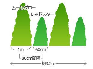 80cm間隔の植え付け目安