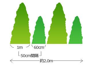 50cm間隔の植え付け目安
