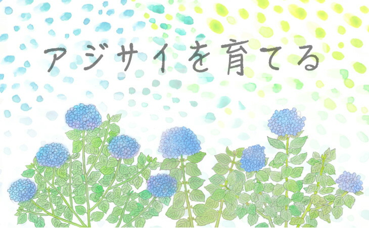 「アジサイ(紫陽花)」の販売