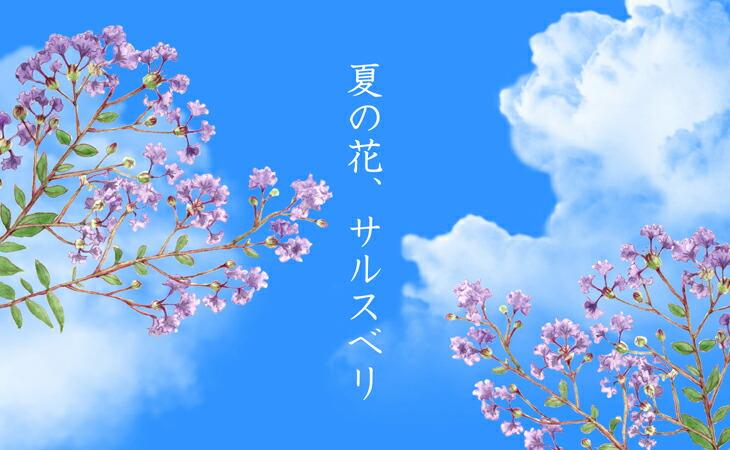 「サルスベリ 紫花 「ディアパープル」」の販売