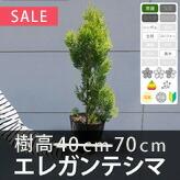 「エレガンテシマ」の販売