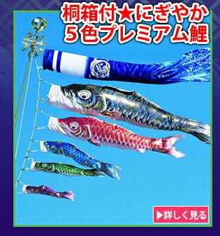 桐箱付★にぎやか5色プレミアム鯉
