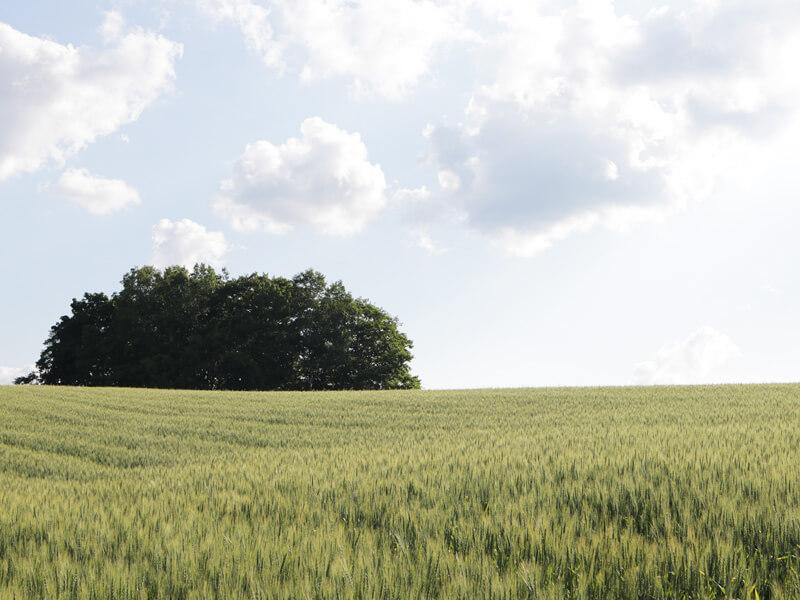 ミニ麦スタンドブーケ#ドライフラワー#イメージ4#富良野の麦畑