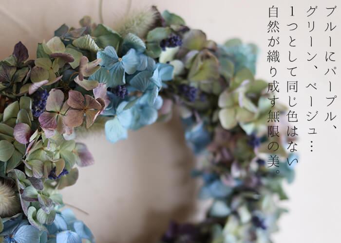 あじさいのリース#ドライフラワー#紫陽花のアップ#色イメージ