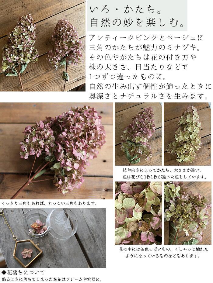 ミナヅキ枝付き#オータムフレイズ#Lサイズ#ドライフラワー#花のかたち・色について