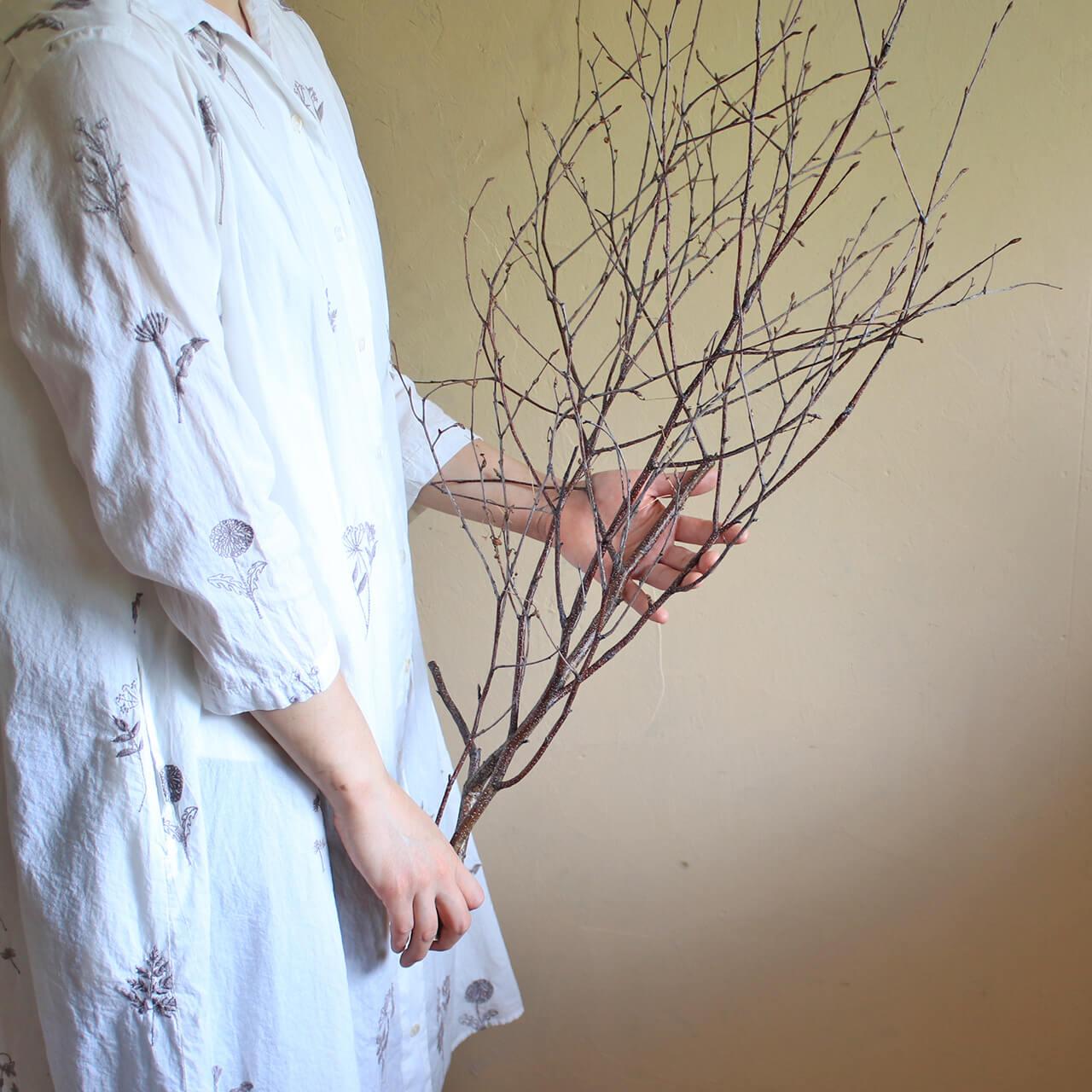 シラカバの枝