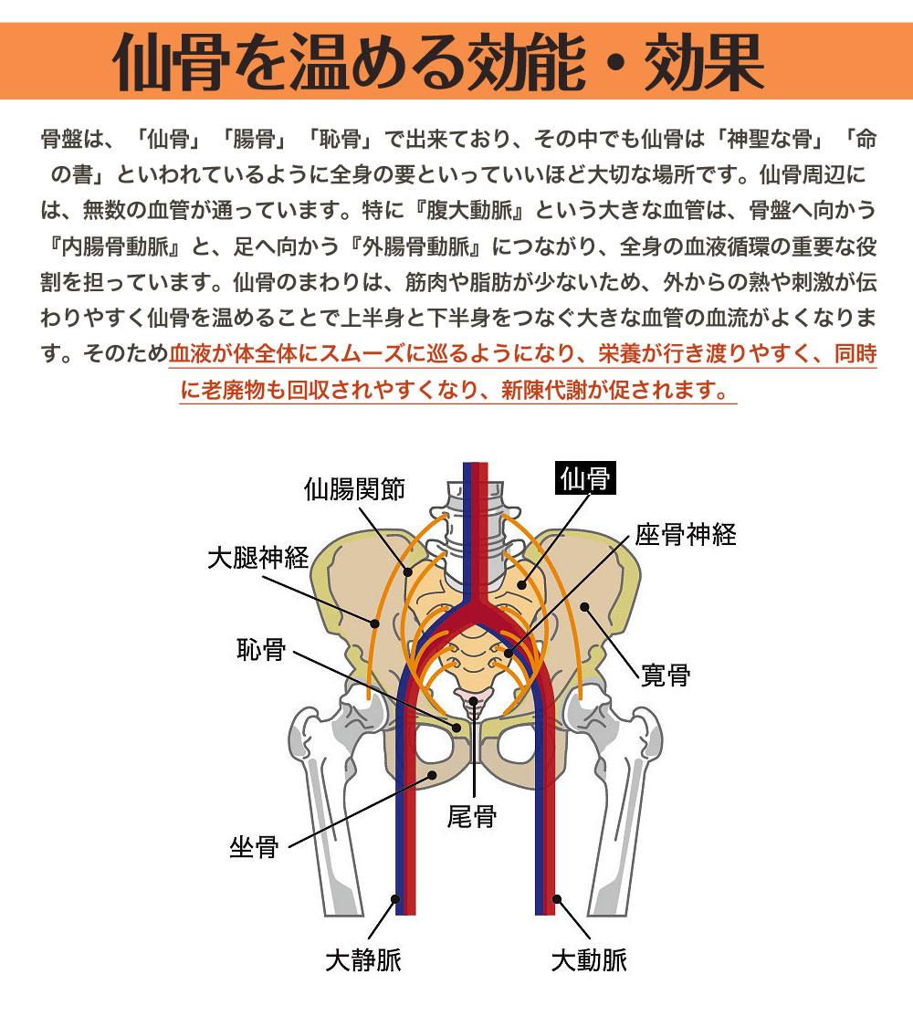 仙骨を温める効能・効果 骨盤は、「仙骨」「腸骨」「恥骨」で出来ており、その中でも仙骨は「神聖な骨」「命の書」といわれているように全身の要といっていいほど大切な場所です。仙骨周辺には、無数の血管が通っています。特に『腹大動脈』という大きな血管は、骨盤へ向かう『内腸骨動脈』と、足へ向かう『外腸骨動脈』につながり、全身の血液循環の重要な役割を担っています。仙骨のまわりは、筋肉や脂肪が少ないため、外からの熟や刺激が伝わりやすく仙骨を温めることで上半身と下半身をつなぐ大きな血管の血流がよくなります。そのため血液が体全体にスムーズに巡るようになり、栄養が行き渡りやすく、同時に老廃物も回収されやすくなり、新陳代謝が促されます。 また、仙骨から下腹部に向かっては「副交感神経」の束が伸びています。副交感神経はリラックスさせる神経で、交感神経が優位になりがちな現代社会では副交感神経を高めることが大切といわれています。就寝時に仙骨を温めることにより、副交感神経を活性化し、リラックス効果が得られ睡眠の質が上がります。深い睡眠は、疲れをとり、身体の免疫力を高め、糖や脂肪の代謝を促進し、自然治癒力を高めます。(参照「仙骨を温めればすべて解決する」中野明儀 著)