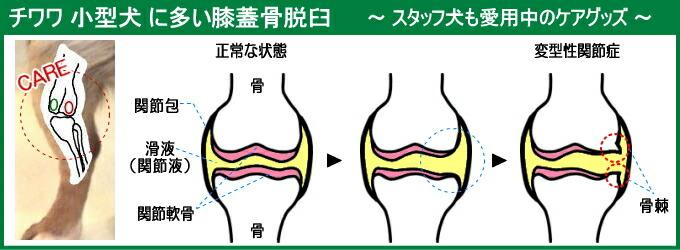 チワワの膝蓋骨脱臼ケアアイテム