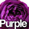 紫・パープル