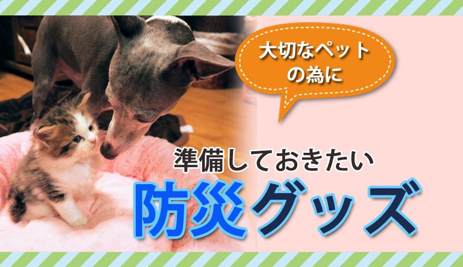 【訳あり】ペットグッズ ドッグ キャット チョコペット用ボストンバッグPINK(いぬ、犬、イヌ)(ねこ、猫、ネコ)キャリーバッグ