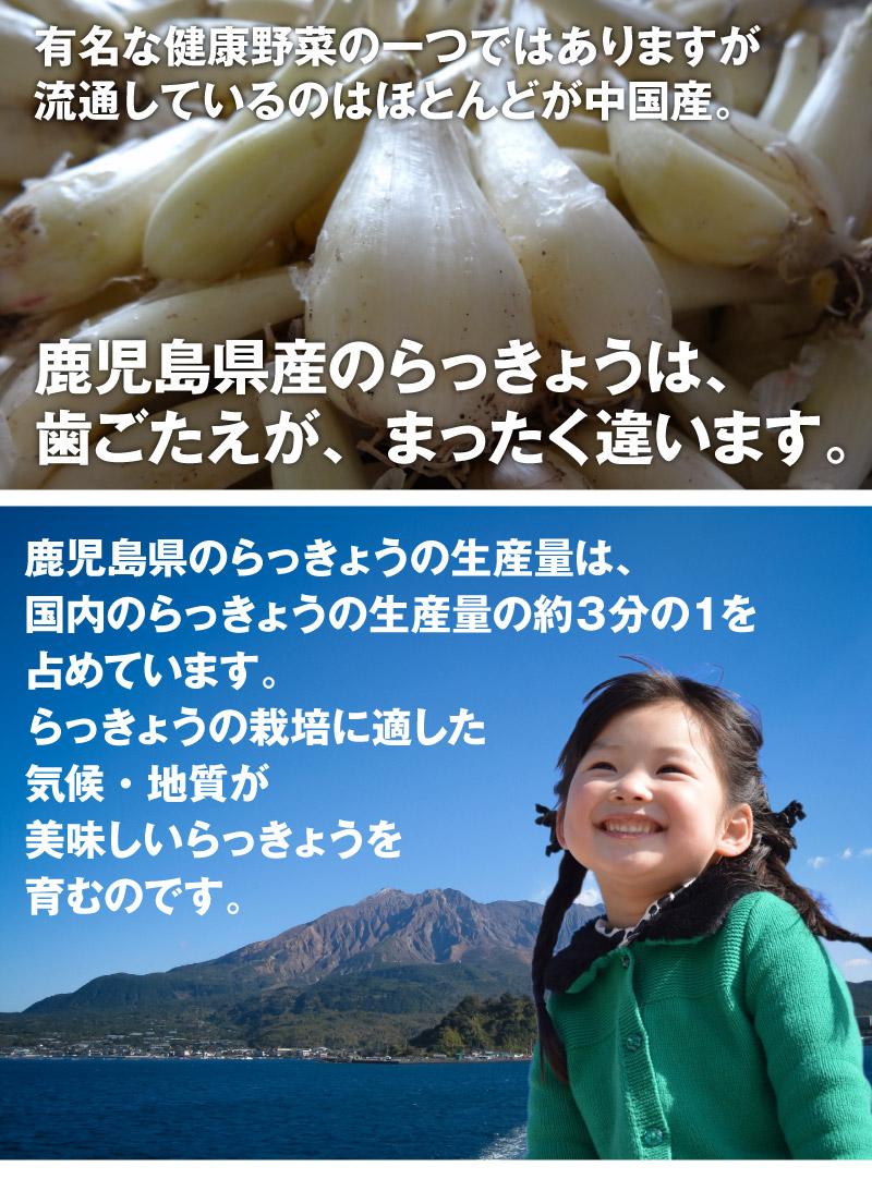 有名な健康野菜の一つではありますが、流通しているのはほとんどが中国産。鹿児島県産のらっきょうは歯ごたえが、全く違います。