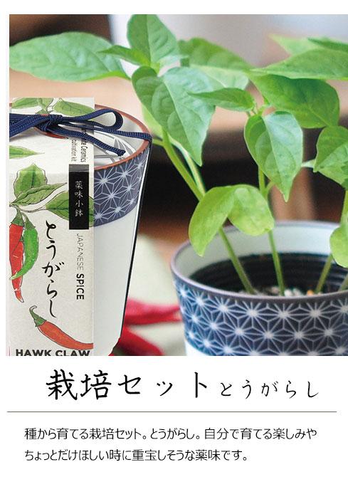 薬味栽培キット