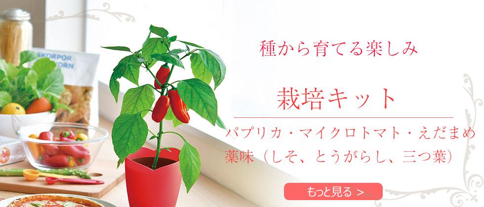 栽培キット