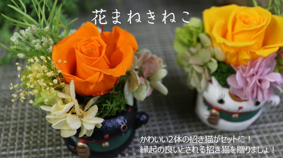 まねきねこ 花