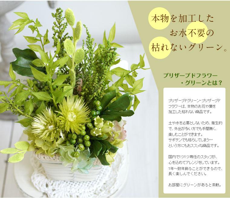 新しいグリーンスタイル始めよう!
