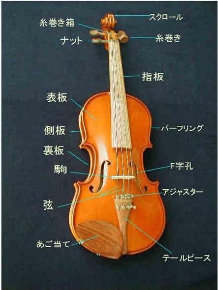 À�楽天市場】バイオリンの参考ページ Gt Ã�イオリン各部の名称:底値楽器屋