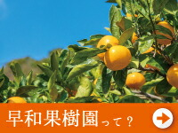 早和果樹園って?
