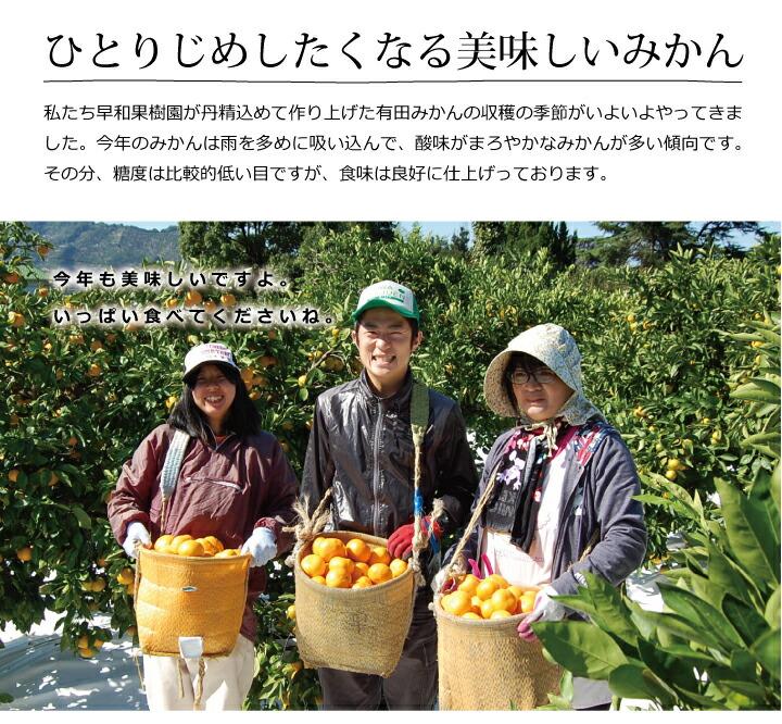 早和果樹園の有田みかん