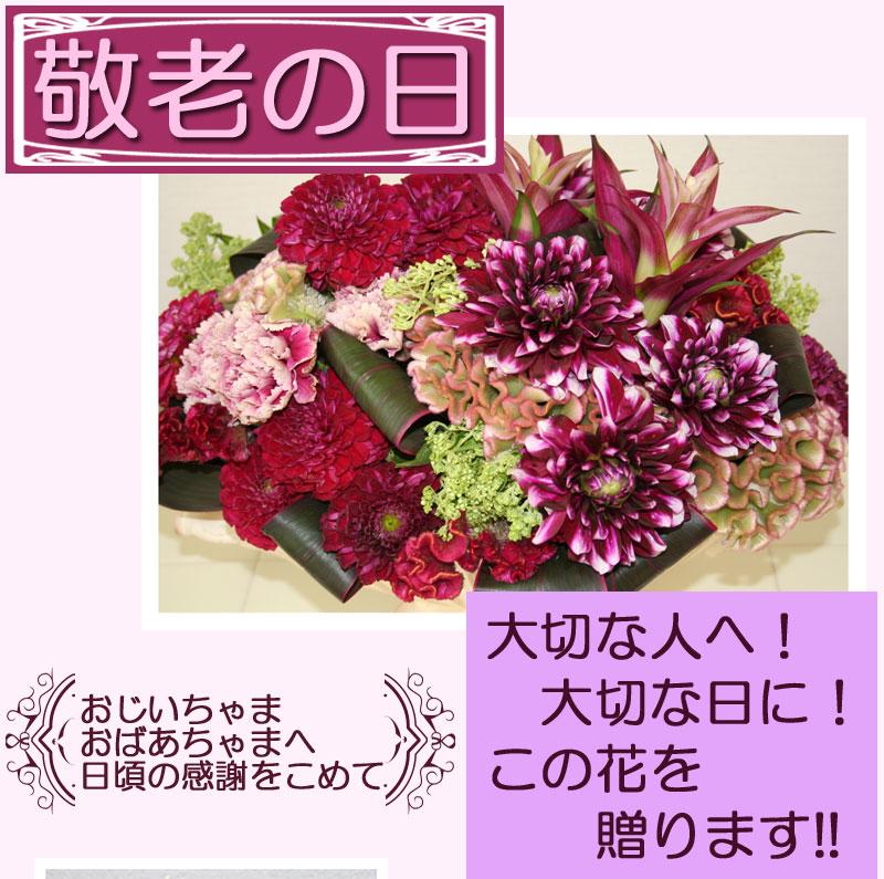 敬老の日 おじいちゃま おばあちゃま 心に残るおしゃれな花を  楽天市場 通信販売 通販 ショッピング オンラインショッピング 買い物 プレゼント ギフト,贈り物,贈答品,お買い得,花の贈り物,フラワーギフト,アレンジ,花束,鉢花,寄せ植え, スイーツセット 花,プリザーブドフラワー,フラワーケーキ,花苗,おしゃれな花屋, センスの良い,誕生日,お供え,寄せ鉢,フラワーボックス,バルーンフラワー, 季節の寄せ植え 鉢花 ギフト