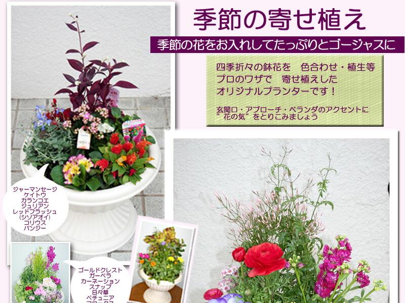季節の寄せ植え スタジオHiro楽天市場店:フラワーギフト