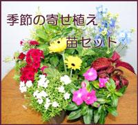 季節の寄せ植え・苗セット スタジオHiro楽天市場店:フラワーギフト