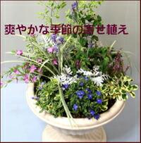 爽やかな季節の寄せ植え スタジオHiro楽天市場店:フラワーギフト